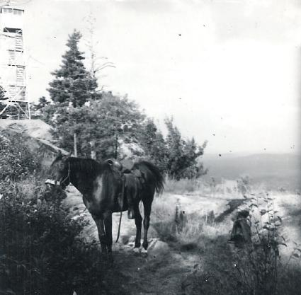 Former Ranger Richard Wormwood's Horse at Bald Mt.